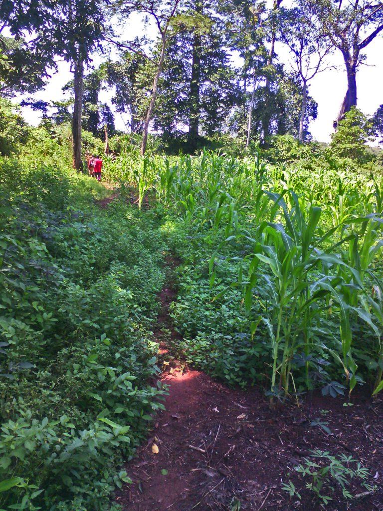 Agriculteurs quittant les champs de Bangui
