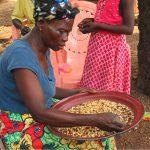 Agricultrice banguissoise triant les grains de ma¨s issus de sa récolte