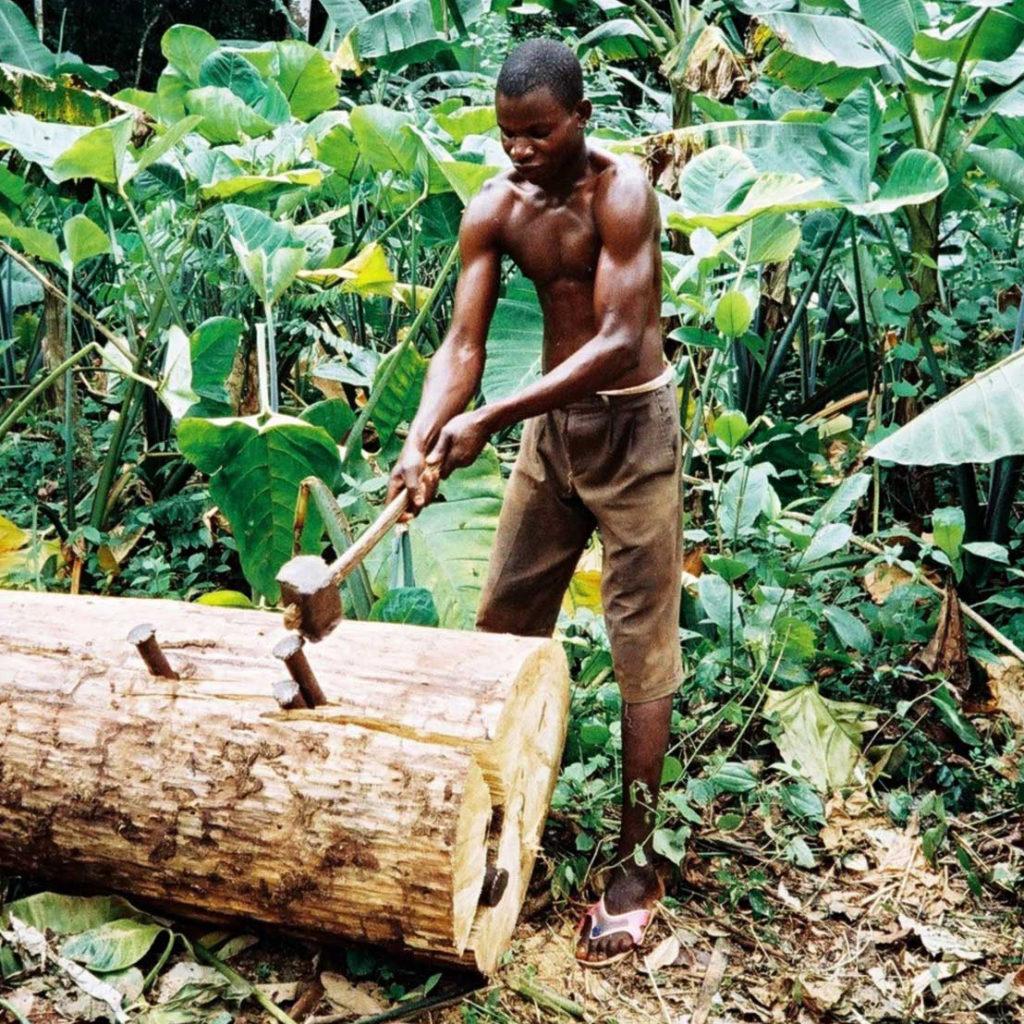 Jeune banguissois, membre de Soboyo, se prépare à fendre un tronc d'arbre