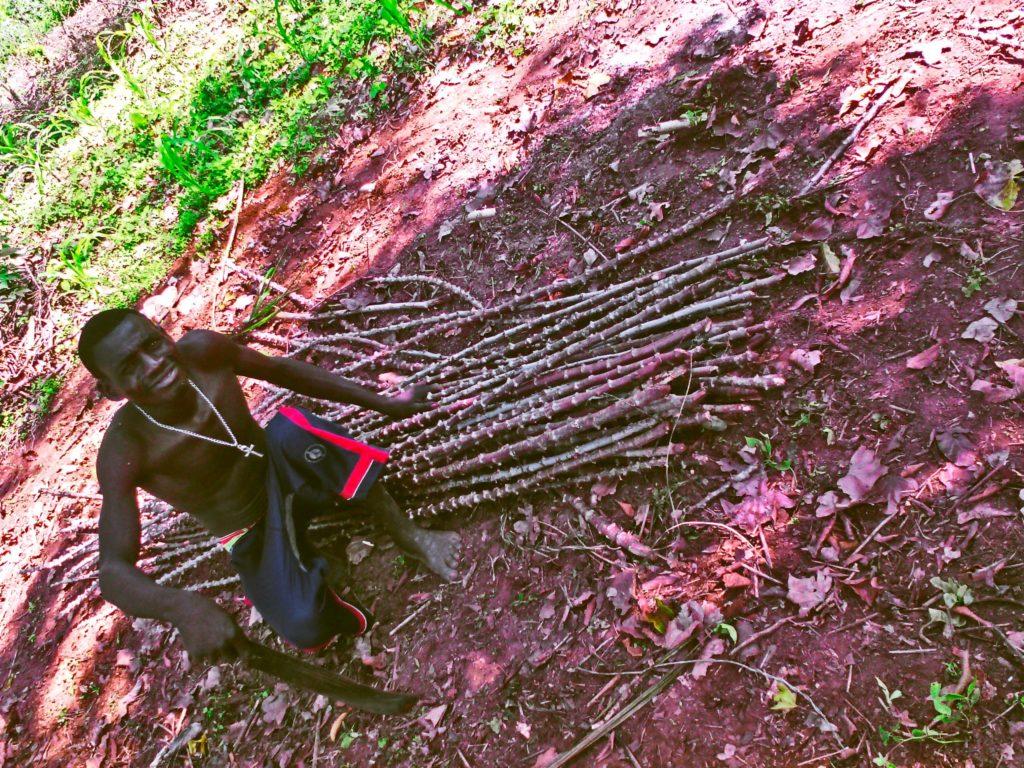 Ramasseur de bois à Bangui pris en photo à côté de bois découpé.