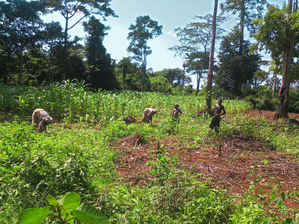Grouep d'agriculters travaillant sur la terre de l'association Soboyo